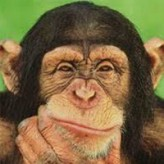are u smarter than a chimp? game