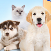 wauies: the pet shop game game